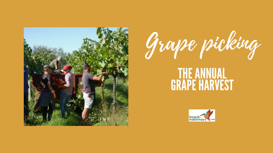 The grape harvest (vendange) in France covers some 750,000 hectares of vineyards as well as unrivalled history, ceremony and celebratory festivals.