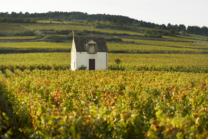 Vineyards of Beaune