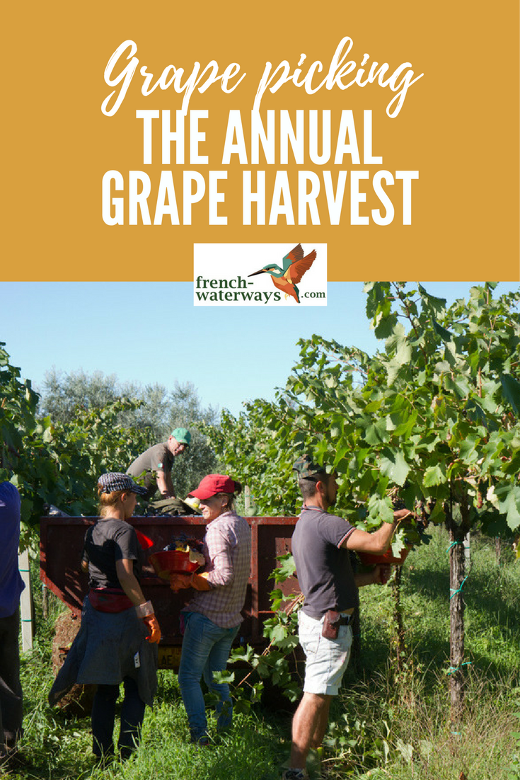 The annual grape harvest in France is an event embedded in French history and culture.