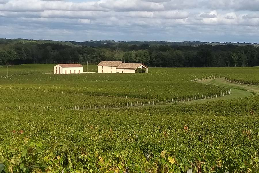 Bordeaux Gironde vineyards France
