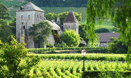 burgundy-vineyard2-500x300