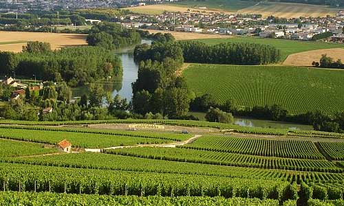 champagne-vineyards-500x300